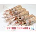 CIGALAS EXTRA GRANDES CRUDAS CONGELADAS
