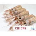 CIGALAS  CHICAS CRUDAS CONGELADAS