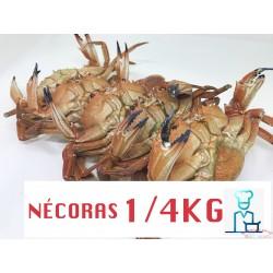 NECORAS COCIDAS CONGELADAS